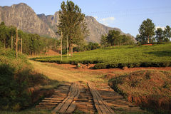 Tea Estate - Mulanje Massif. The Mulanje Massif, also known as Mount Mulanje, is a large monadnock in southern Malawi only 65 km east of Blantyre, rising sharply stock image