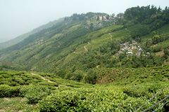 Tea Estates Stock Photo