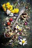 tea för glass växt- för horsetail för fokus för arvensekoppequisetum selektiv naturmedicin för avkok Royaltyfri Foto