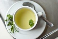 tea för glass växt- för horsetail för fokus för arvensekoppequisetum selektiv naturmedicin för avkok Arkivfoton