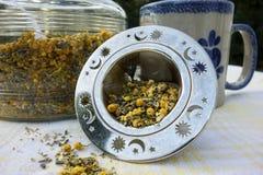 tea för glass växt- för horsetail för fokus för arvensekoppequisetum selektiv naturmedicin för avkok Fotografering för Bildbyråer