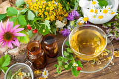 tea för glass växt- för horsetail för fokus för arvensekoppequisetum selektiv naturmedicin för avkok Royaltyfria Bilder
