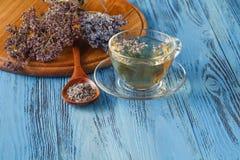 tea för glass växt- för horsetail för fokus för arvensekoppequisetum selektiv naturmedicin för avkok Lavendelavkok i en glass kop Royaltyfri Fotografi