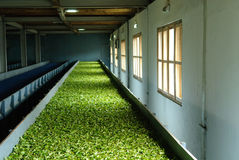 Tea factory Stock Image