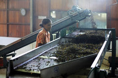 Tea Factory Stock Images
