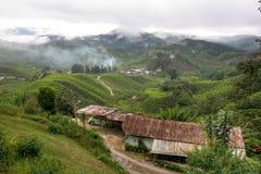 Tea farm. In the Cameron Highlands in Malysia Stock Image
