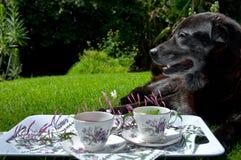Tea on the farm Stock Images