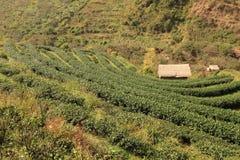 Tea farm Royalty Free Stock Photography