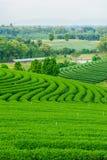 Tea farm blue sky. Green Tea farm blue sky Royalty Free Stock Photos