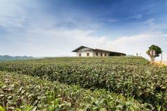 Tea farm Stock Photo