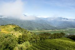 The tea farm on the mountaintop Royalty Free Stock Photo