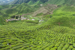 Tea farm on the moutain Stock Images