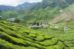 Tea farm on the moutain Royalty Free Stock Photography