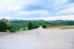 Tea farm Road blue sky. At thailand Royalty Free Stock Image