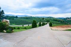 Tea farm Road blue sky. At thailand Royalty Free Stock Photography