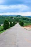 Tea farm Road blue sky. At thailand Stock Image