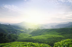 Tea Farm sunrise scenery from hill top of Cameron Highland, Malaysia Stock Images
