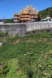 Tea farm in Taiwan. Hillside tea plantations in Shizhuo, Alishan mountains royalty free stock photography