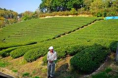 Tea farm, Wazuka, Japan Royalty Free Stock Photography