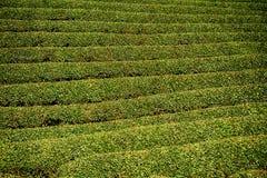 Tea farm, Wazuka, Japan. Tea farm in Wazuka, Japan Stock Photo