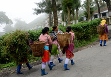 Tea farm workers on the way Stock Image