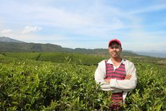 Tea farmer Royalty Free Stock Photos