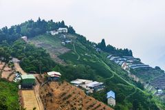 Tea farms on a mountain Royalty Free Stock Photos