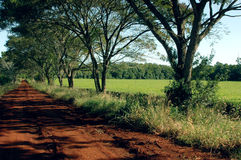 Tea field. A red earth road and a tea field in Misiones Argentina Stock Photography