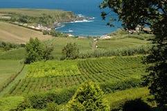 Tea fields in the Azores stock photos