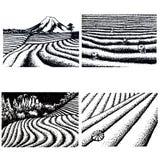 Tea fields of Japan royalty free illustration