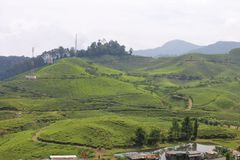 Tea fields in Puncak, Indonesia. Beautiful view of tea fields in Puncak, Indonesia royalty free stock image