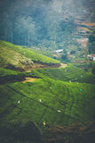 Tea fields in Sri Lanka. Tea pickers on green tea fields in SriLanka, Nuwara Eliya Stock Photos