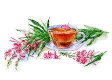 Tea with fire weed. Royalty Free Stock Photo