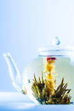 Tea Flower in a Clear Teapot Royalty Free Stock Images