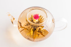 Tea Flower in a Clear Teapot Stock Photo