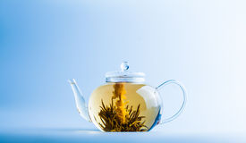 Tea Flower in a Clear Teapot Royalty Free Stock Photography