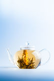 Tea Flower in a Clear Teapot Stock Images