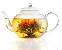 Tea Flower in a Clear Teapot Stock Photos