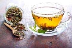 tea för glass växt- för horsetail för fokus för arvensekoppequisetum selektiv naturmedicin för avkok Arkivbilder