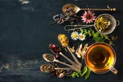 tea för glass växt- för horsetail för fokus för arvensekoppequisetum selektiv naturmedicin för avkok Royaltyfri Fotografi