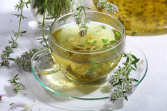 Tea with fragrant grasses and mint in a transparent cup Stock Image