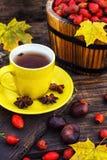 Tea with fruits of dog-rose Stock Photos