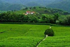 Tea garden. The sping of tea garden in south china Stock Photos