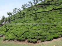 Tea garden awesome view from top of hill road of tea garden path way. This snap is from tea ooty india. Awesome tourist place that you always love that is so Royalty Free Stock Images