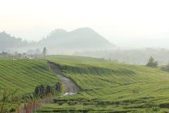 Tea garden in bogor Royalty Free Stock Photo
