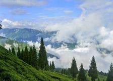 Tea garden Royalty Free Stock Photo