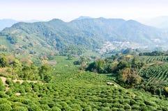 Tea garden. The fog of hangzhou west lake longjing tea garden, in China royalty free stock photography