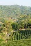 Tea garden with mountain view Royalty Free Stock Photos