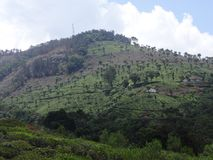 Tea garden at hills. This is a tea garden from ooty, india. Awesome view of tea garden that you may love Stock Photo