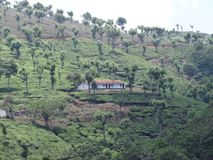Tea Garden hills close view. This is a tea garden from ooty, india. Awesome view of tea garden that you may love Royalty Free Stock Image